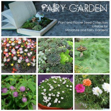Fairy Garden Plant Seed Collection - 6 Varieties