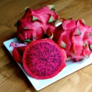 Red Dragon Fruit Pitaya Roja Hylocereus costaricensis - 30 Seeds