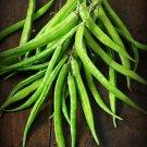 Rare Cluster Bean Guar Cyamopsis tetragonolobus - 15 Seeds