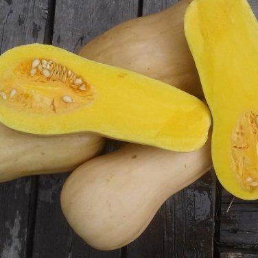 Heirloom Waltham Butternut Squash Cucurbita moschata - 30 Seeds