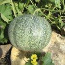 French True Petit Gris de Rennes Rare Small Heirloom Gourmet Melon Cucumis Melo - 20 Seeds