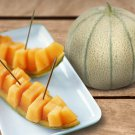 French Cantaloupe True Charentais Rare Heirloom Gourmet Melon Cucumis Melo - 20 Seeds