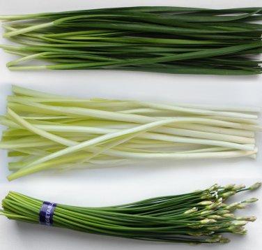 Organic Kitchen Herb Asian Garlic Chives Chinese Leek Allium Tuberosum - 300 Seeds
