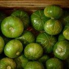 Rare Zapallito Redondo del Tronco Cucurbita maxima var. zapallito - 8 Seeds