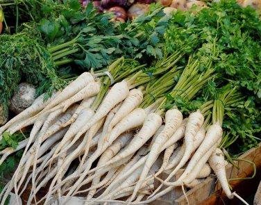 Old World Parsley Root Vegetable Petroselinum crispum tuberosum - 100 Seeds