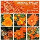 Orange Splash & Tangerine Shades Flower Seed Collection - 6 Varieties