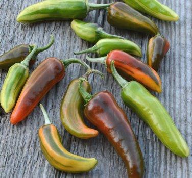 Rare Heirloom Variegated Fish Pepper Capsicum annuum - 10 Seeds