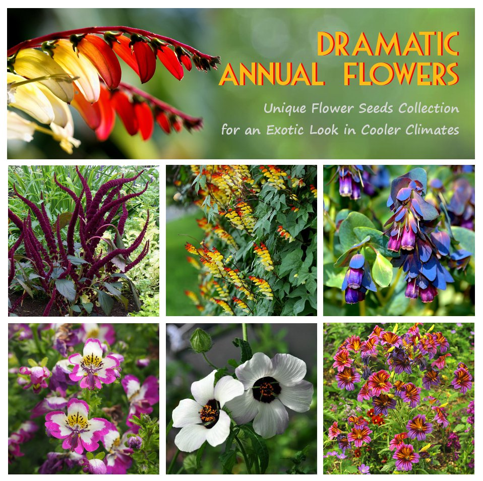 Exotic Annual Ornamental Flower Seed Collection - 6 Varieties