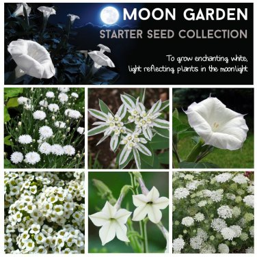 Moon garden starter white flower seed collection 6 varieties mightylinksfo