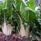 Sale! Organic Heirloom Leaf Beet Swiss Chard White Beta vulgaris 2 for 1 - 200 Seeds