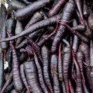 Rare Organic Medieval German 'Black' Carrot Daucus Carota - 50 Seeds