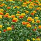 Bulk Organic Herb Safflower Carthamus Tinctorius - 1000 Seeds