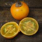 Quito Orange Naranjilla Lulo Solanum Quitoense - 15 Seeds