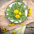 Edible Flower Dandelion Organic Taraxacum Officinale - 120 Seeds