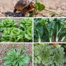 Vegetarian Lizard and Pet Tortoise Salad Greens Seed Mix - 1 OZ