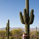 Rare Giant Desert Cactus Saguaro Carnegiea gigantea - 25 Seeds