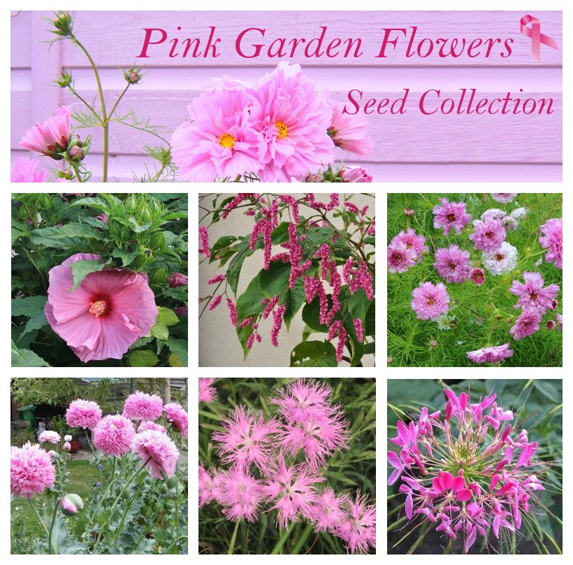 Romantic Pink Shades Flower Seed Collection - 6 Varieties