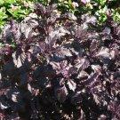 Goth Garden Almost Black Basil Purple Ruffles OP Ocimum basilicum - 50 Seeds