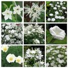 Moon Garden Monochromatic White Flower Seed Collection - 9 Varieties