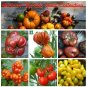 Colorful Organic Heirloom Tomato Seed Collection - 6 Varieties