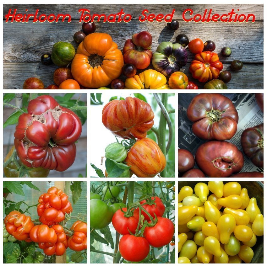 Unique Organic Heirloom Tomato Seed Collection - 6 Varieties