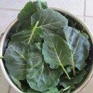 Vates Collard Brassica oleracea var. viridis - 200 Seeds