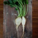Sweet Sugar Beet Beta vulgaris altissima - 75 Seeds