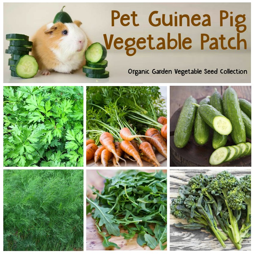 Organic Guinea Pig Vegetable Patch Seed Collection - 6 Varieties