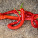 Turkish Heirloom Corbaci Pepper Capsicum annuum - 10 Seeds