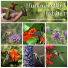 Hummingbird Garden Flower Seed Collection - 6 Varieties