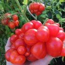 Tomato Bizarre Rare Heirloom Reisetomate Lycopersicon lycopersicum - 20 Seeds