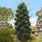 Rare Hardy Chilean Sapphire Tower Puya alpestris - 30 Seeds
