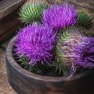 Organic Herb Milk Thistle Silybum marianum - 50 Seeds