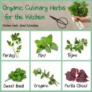Organic Culinary Kitchen Herbs Seed Collection - 6 Varieties