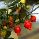 Rare Sweety Drop Pepper Biquinho Pimenta De Bico - 20 Seeds