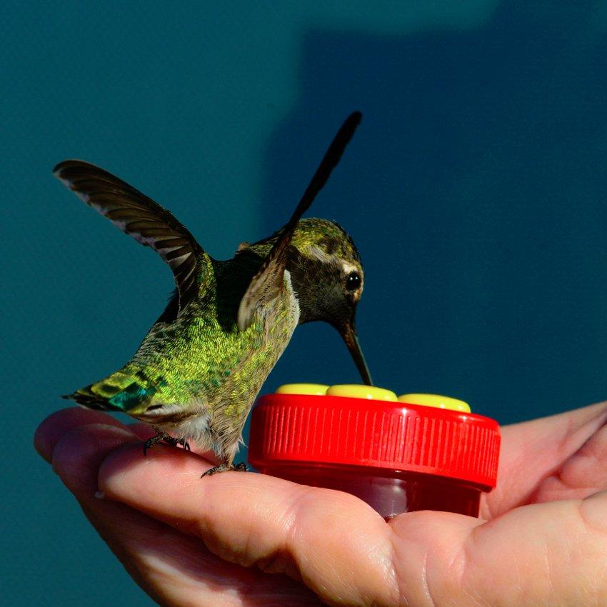 Personal Hummingbird Hand Feeder
