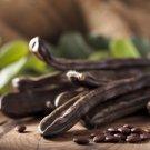 Carob Chocolate Tree Ceratonia siliqua - 15 Seeds