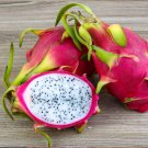 White Dragon Fruit Pitaya Blanca Hylocereus undatus - 40 Seeds