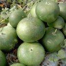 Heirloom Giant African Bushel Basket Gourd Lagenaria siceraria - 10 Seeds