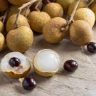 Rare Dragons Eye Longan Fruit Dimocarpus longan - 8 Seeds/Fruits