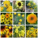 Yellow Shades Monochromatic Flower Seed Collection - 9 Varieties