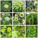 Green and Chartreuse Monochromatic Flower Seed Collection - 9 Varieties