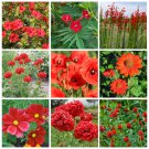 Red Shades Monochromatic Flowers Seed Collection - 9 Varieties