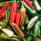 African Heirloom Variegated Fish Chili Pepper Capsicum annuum - 20 Seeds