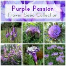 Purple Shades Flower Seed Gift Collection - 6 Varieties