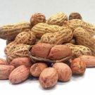 Peanuts Plant Legume Arachis hypogaea - 25 Seeds
