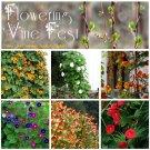 Charming Flowering Vine Fest Seed Collection - 6 Varieties