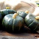 Bulk Heirloom Sweet Winter Squash Buttercup Cucurbita maxima - 150 Seeds