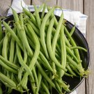 Heirloom Early Contender Green Bean Phaseolus vulgaris - 80 Seeds