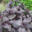 Organic Heirloom Kitchen Herb Dark Opal Purple Basil Ocimum basilicum – 50 Seeds